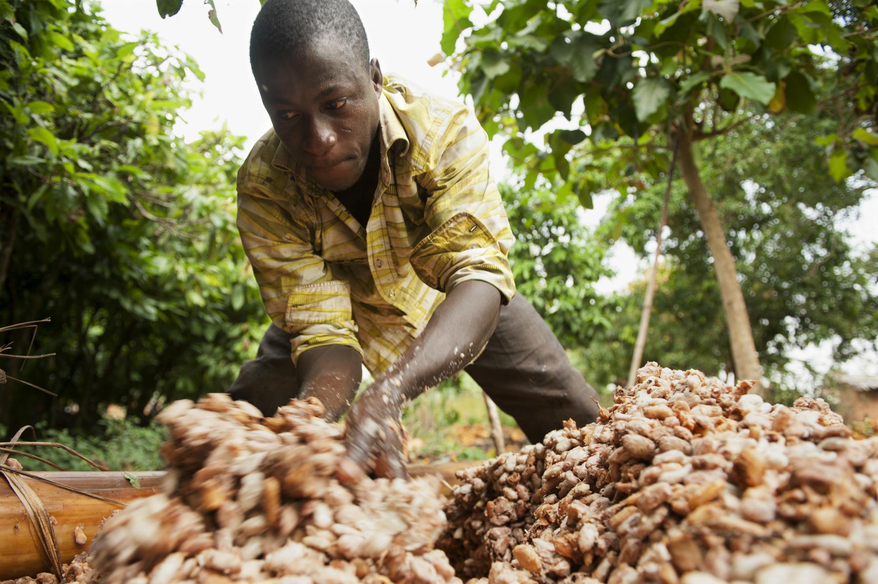Guilt-free chocolate: Supermarket giant Aldi embraces fair trade cocoa